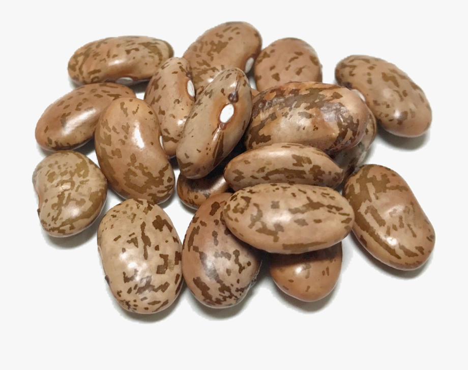 Dry png transparent images. Beans clipart dried bean