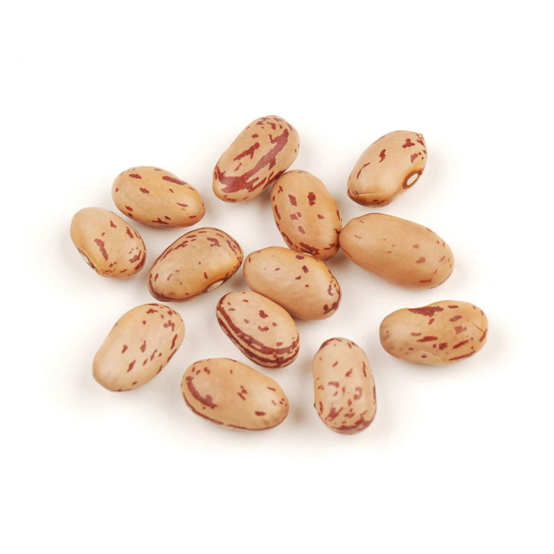 Beans clipart dry bean. Adzuki with fruit and