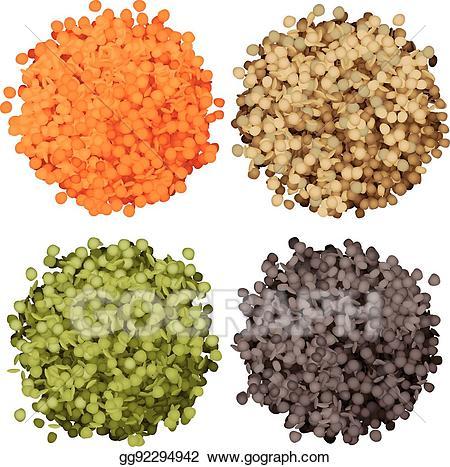 Vector stock various types. Beans clipart lentils