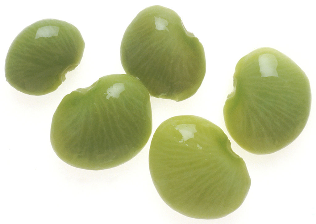 File nci jpg wikimedia. Beans clipart lima bean