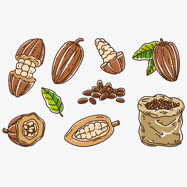 Beans clipart nuts. Vector real cocoa green