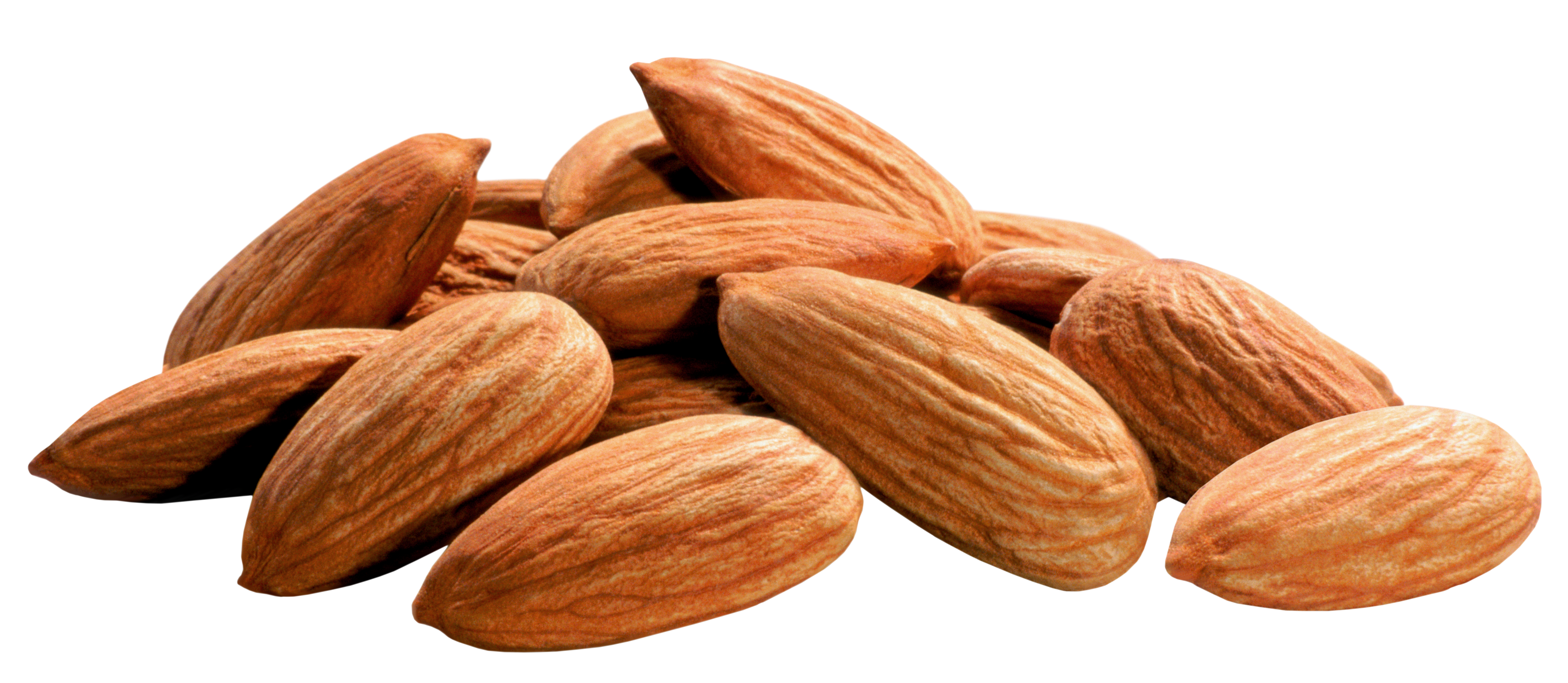 Beans clipart nuts. Free almonds collection vector