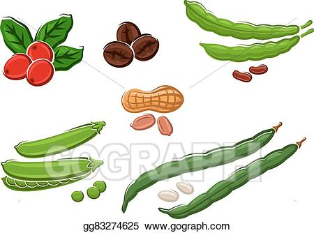 Vector illustration assorted fresh. Beans clipart nuts