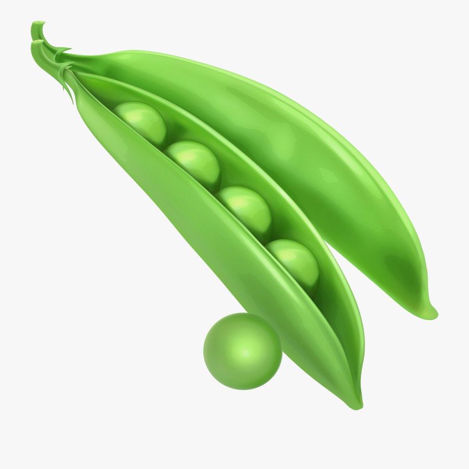 Peas png free cliparts. Beans clipart pea