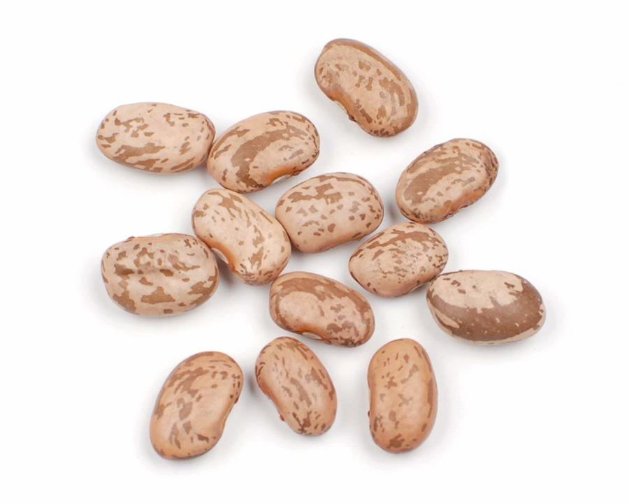 Beans clipart pinto bean. Resolution refried