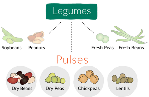 What are pulses manitoba. Beans clipart pulse