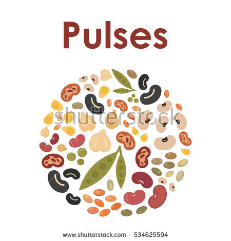 Beans clipart pulse. Pencil and in color