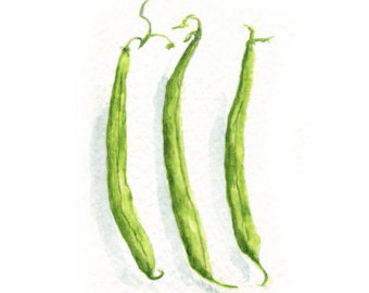 Green print etsy watercolor. Beans clipart runner bean