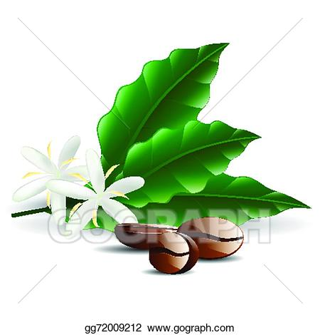 Beans clipart single. Vector coffee bean with