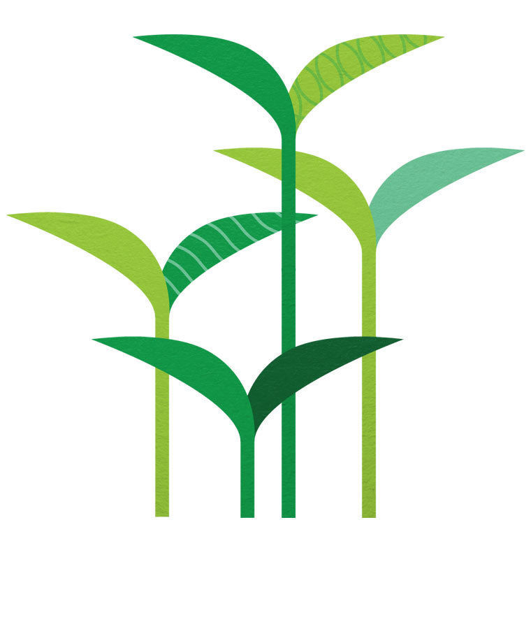About silk soymilk simply. Beans clipart soybean