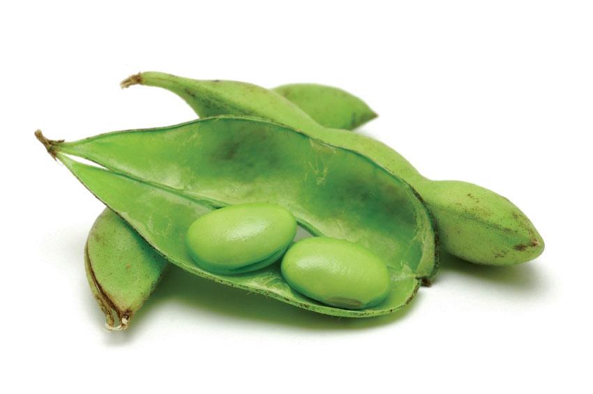 Oil delizio. Beans clipart soybean