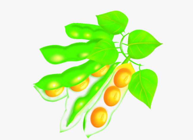 Beans clipart soybean. Material soy plants yellow