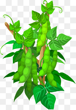 Png vectors psd and. Beans clipart soybean