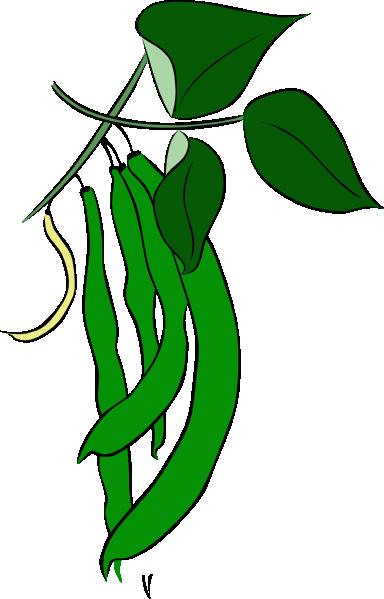 Bean clipart cartoon. Green beans clip art