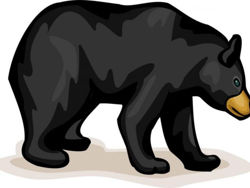 Mar bears in granby. Bear clipart american black bear