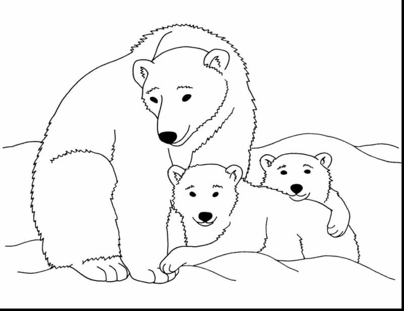 Bear clipart bear cub. And drawing at getdrawings