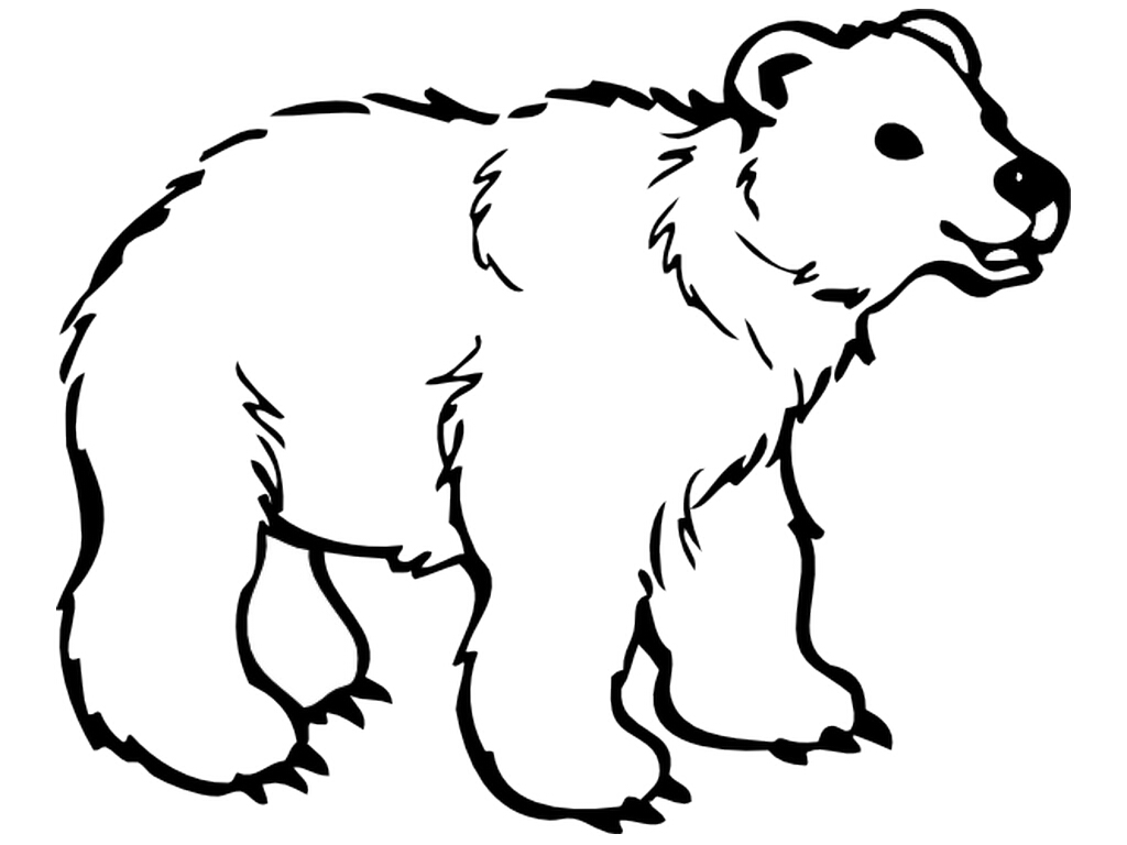 Revealing polar pictures to. Bear clipart beruang