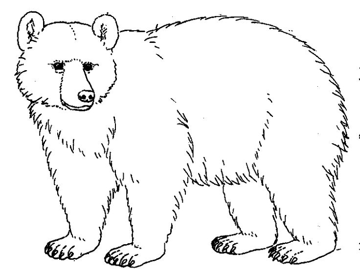 collection of bear. Bears clipart black and white