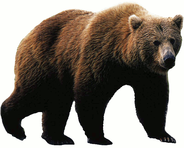 Bears clipart real. Free bear clip art