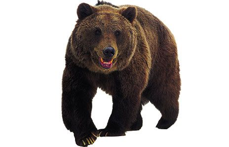 Pretty standing free images. Bear clipart grizzly bear