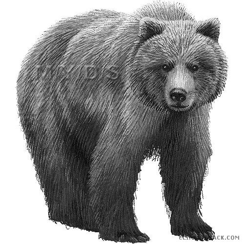 Bear clipart grizzly bear. Clipartblack com animal free