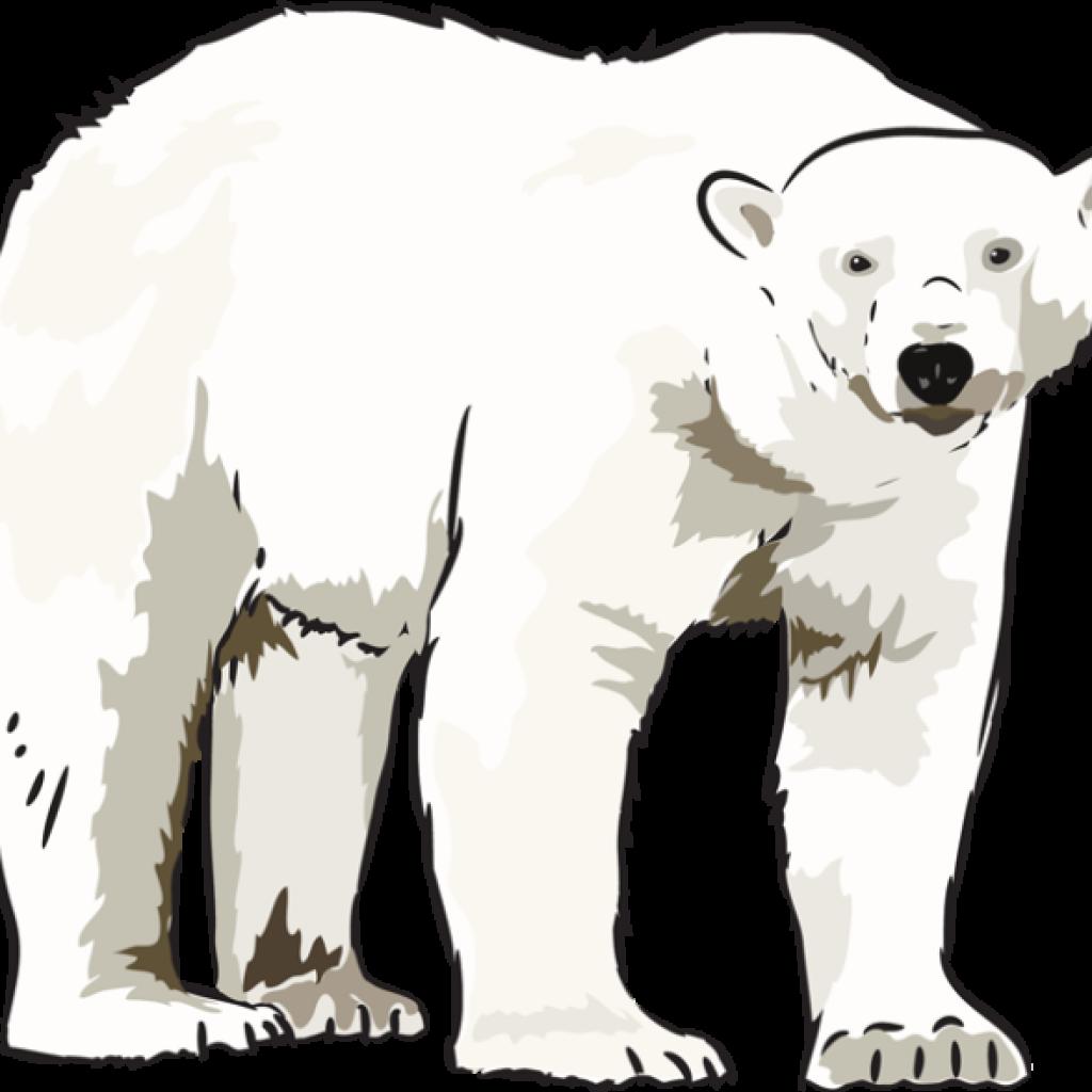 Bear clipart kid. Polar heart hatenylo com