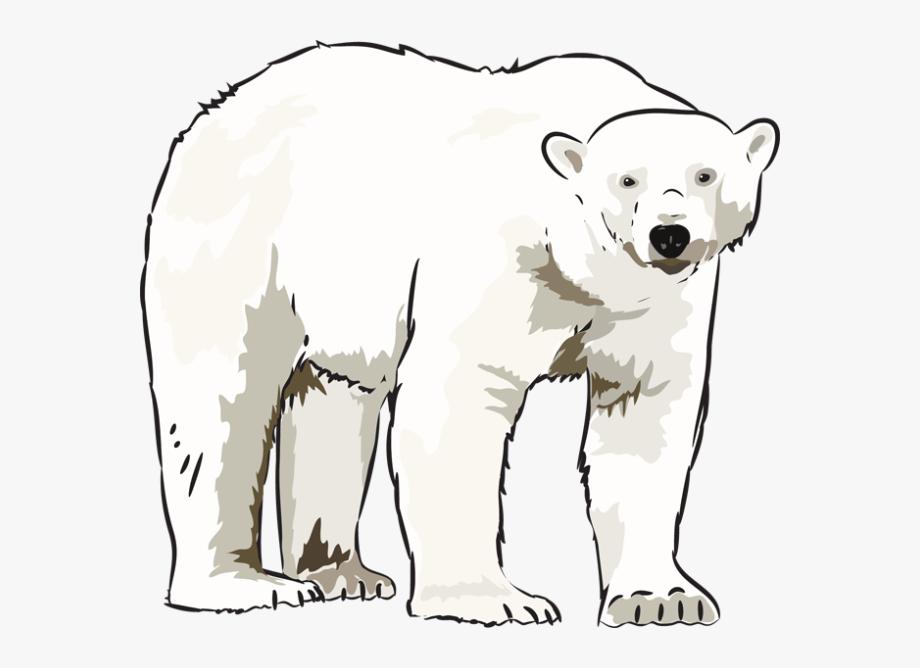 Art kid clip . Clipart bear polar bear