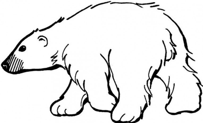 Polar drawing ideas pinterest. Bear clipart printable