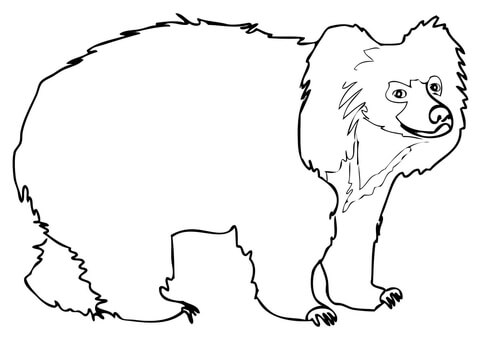 Bear clipart sloth bear. Coloring page free printable