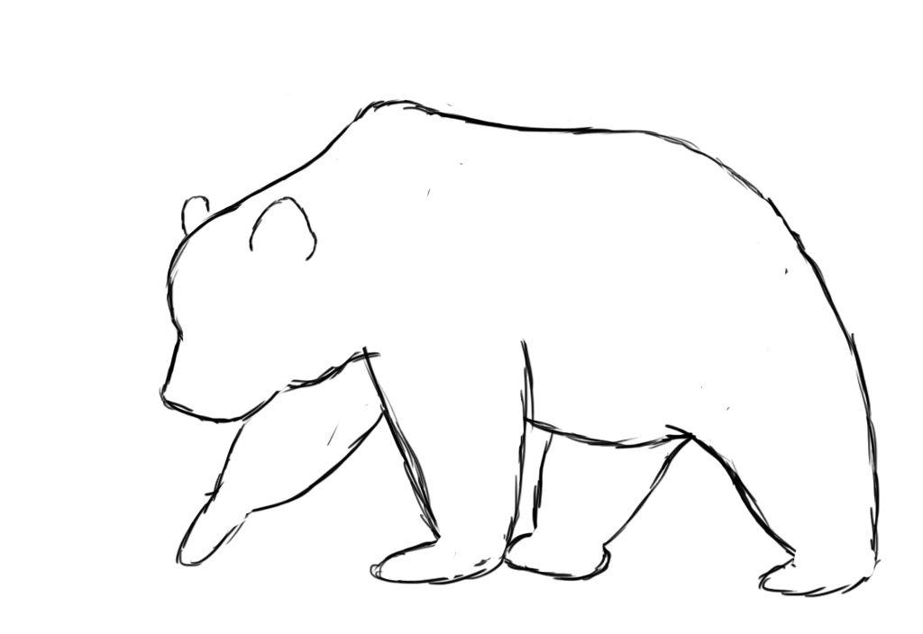 Bear clipart spirit bear. Outline drawings of how