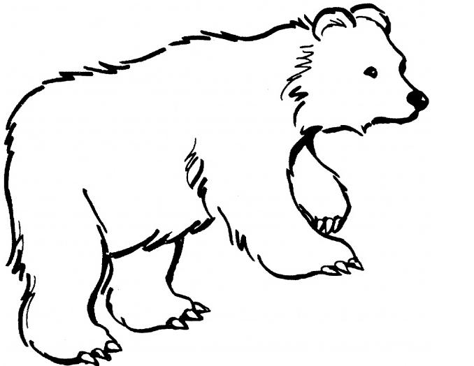 Bear clipart spirit bear. Baby polar drawing at