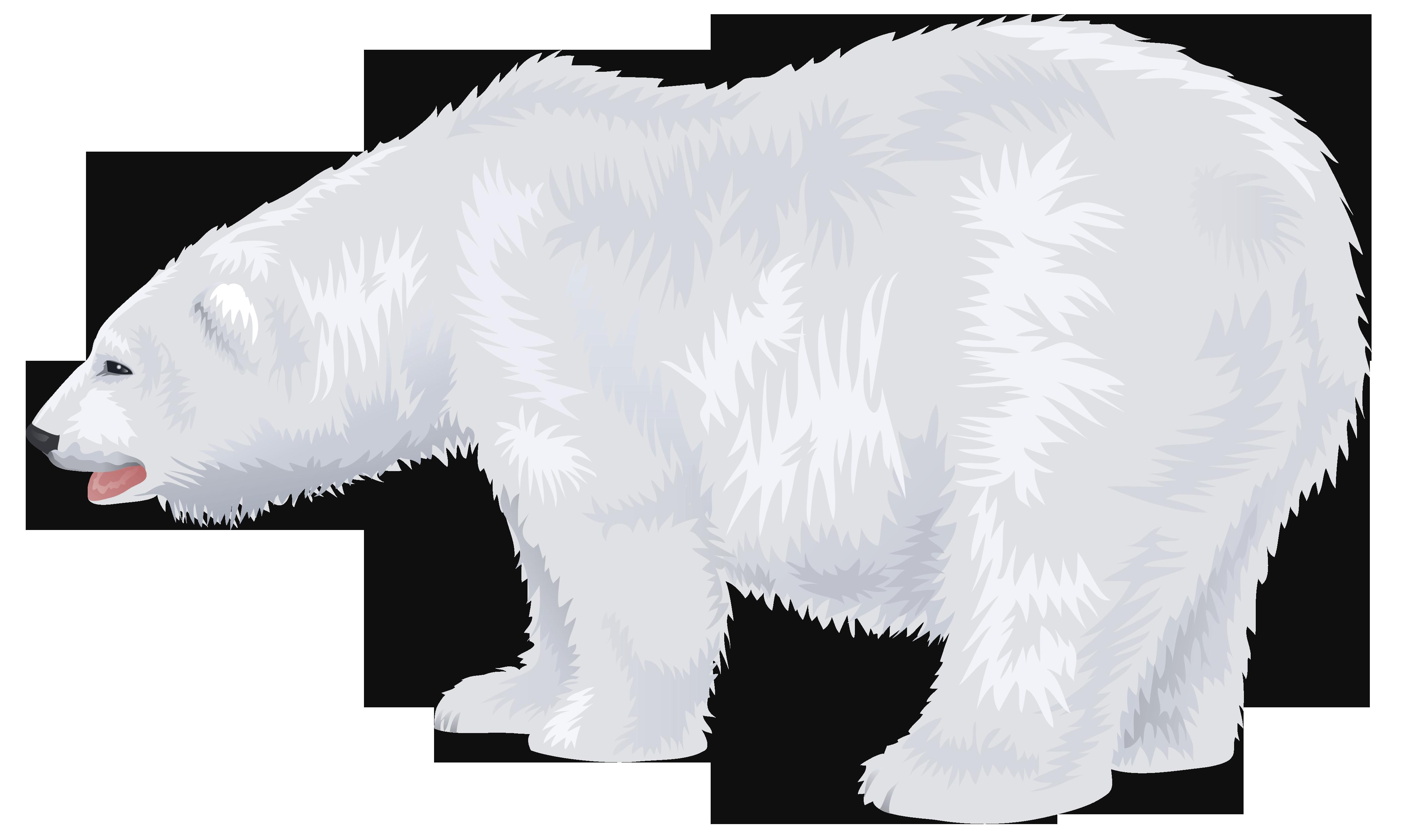 White polar transparent png. Clipart bear carnivore