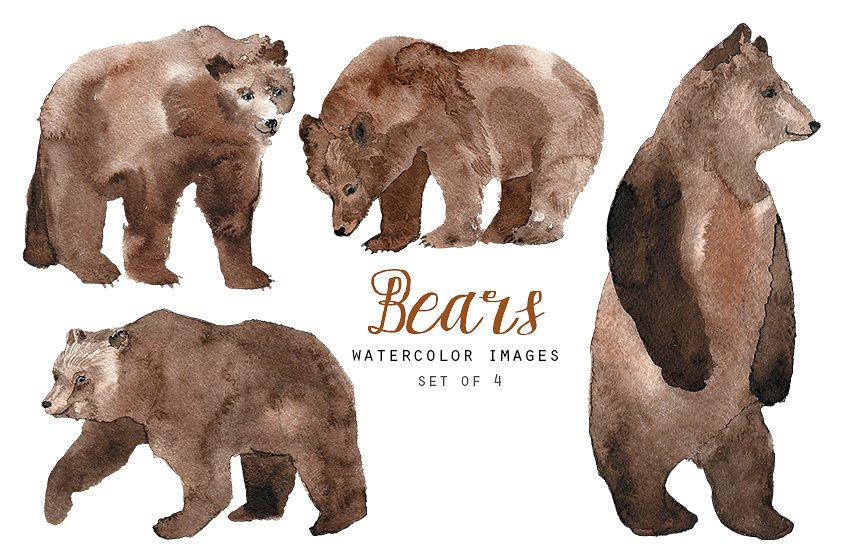 Bear clipart watercolor. Bears illustrations creative market