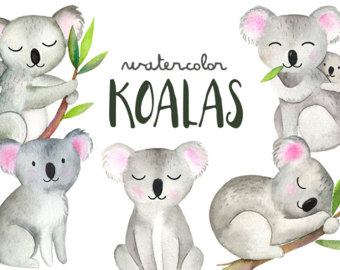Bears etsy koalas koala. Bear clipart watercolor