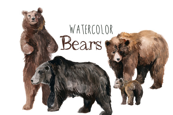 Bears clip art forest. Bear clipart watercolor