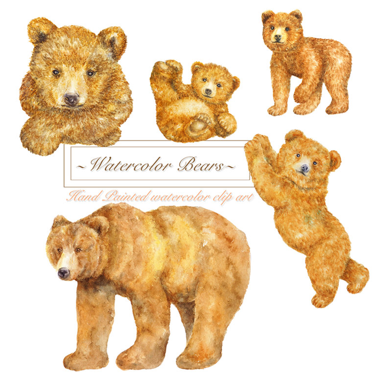 Forest brown bears woodland. Bear clipart watercolor