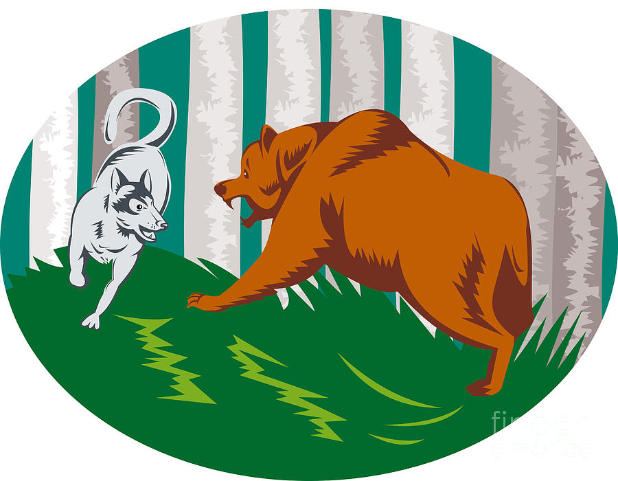 Bear clipart wolf. Wild dog fighting grizzly