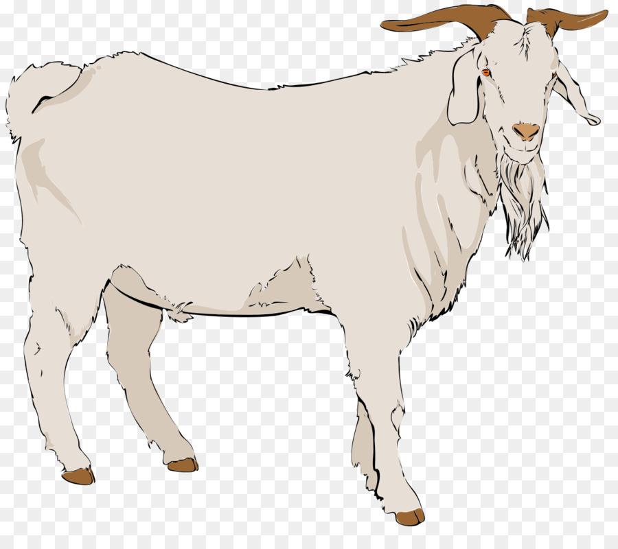 Boer angora pygmy black. Beard clipart goat