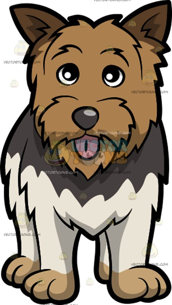 Beard clipart scruffy. An adorable yorkshire terrier