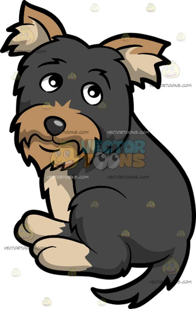 Beard clipart scruffy. A very cute yorkshire
