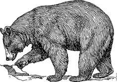 Animal line art drawing. Bears clipart american black bear