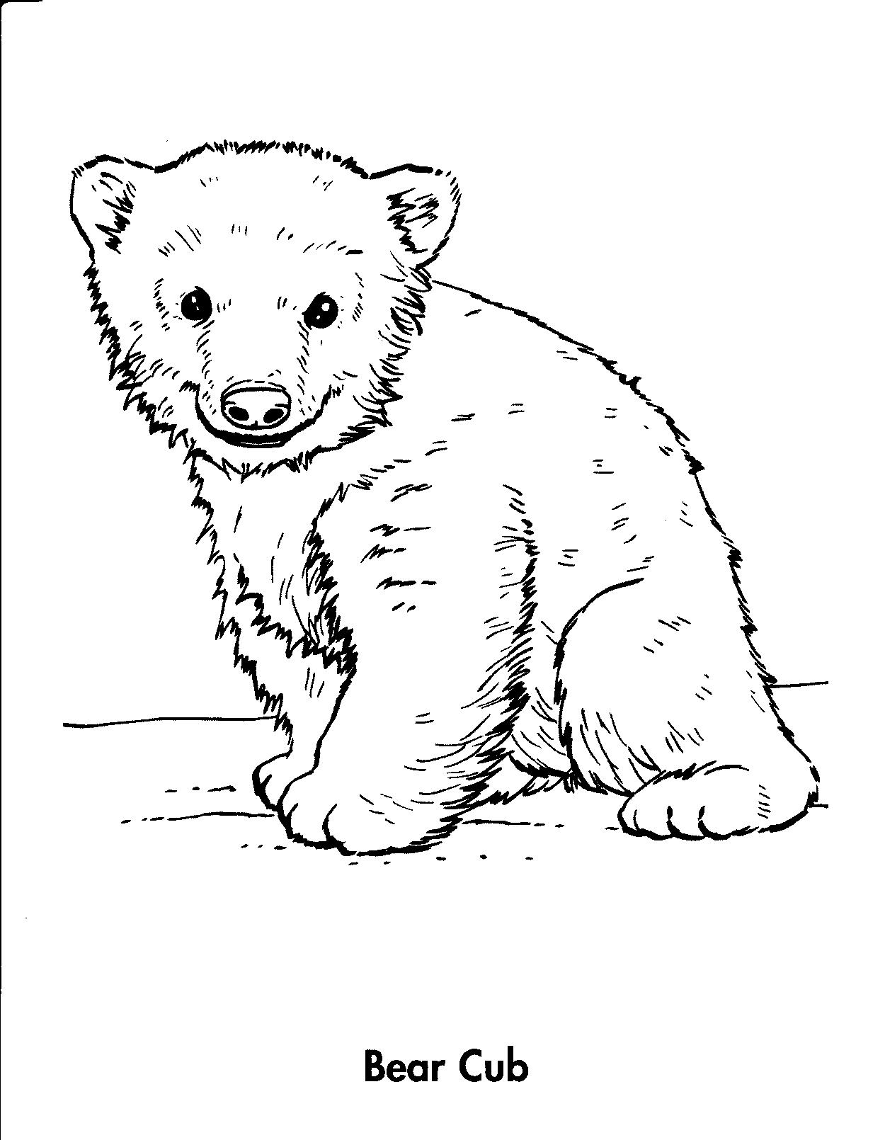And drawing at getdrawings. Bears clipart bear cub