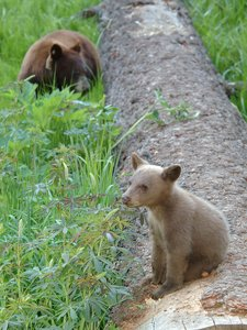 Free photo image best. Bears clipart bear cub