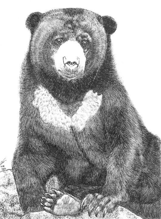Malayan sun bear madu. Bears clipart beruang
