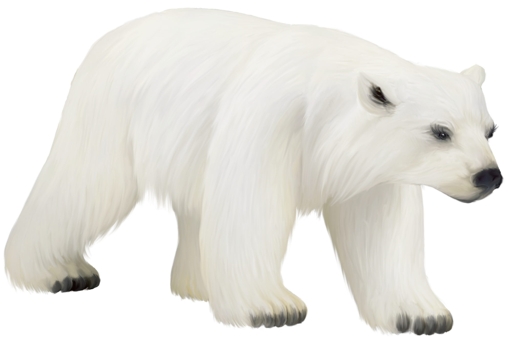 Clipart bear bear cub. Large painted png polar