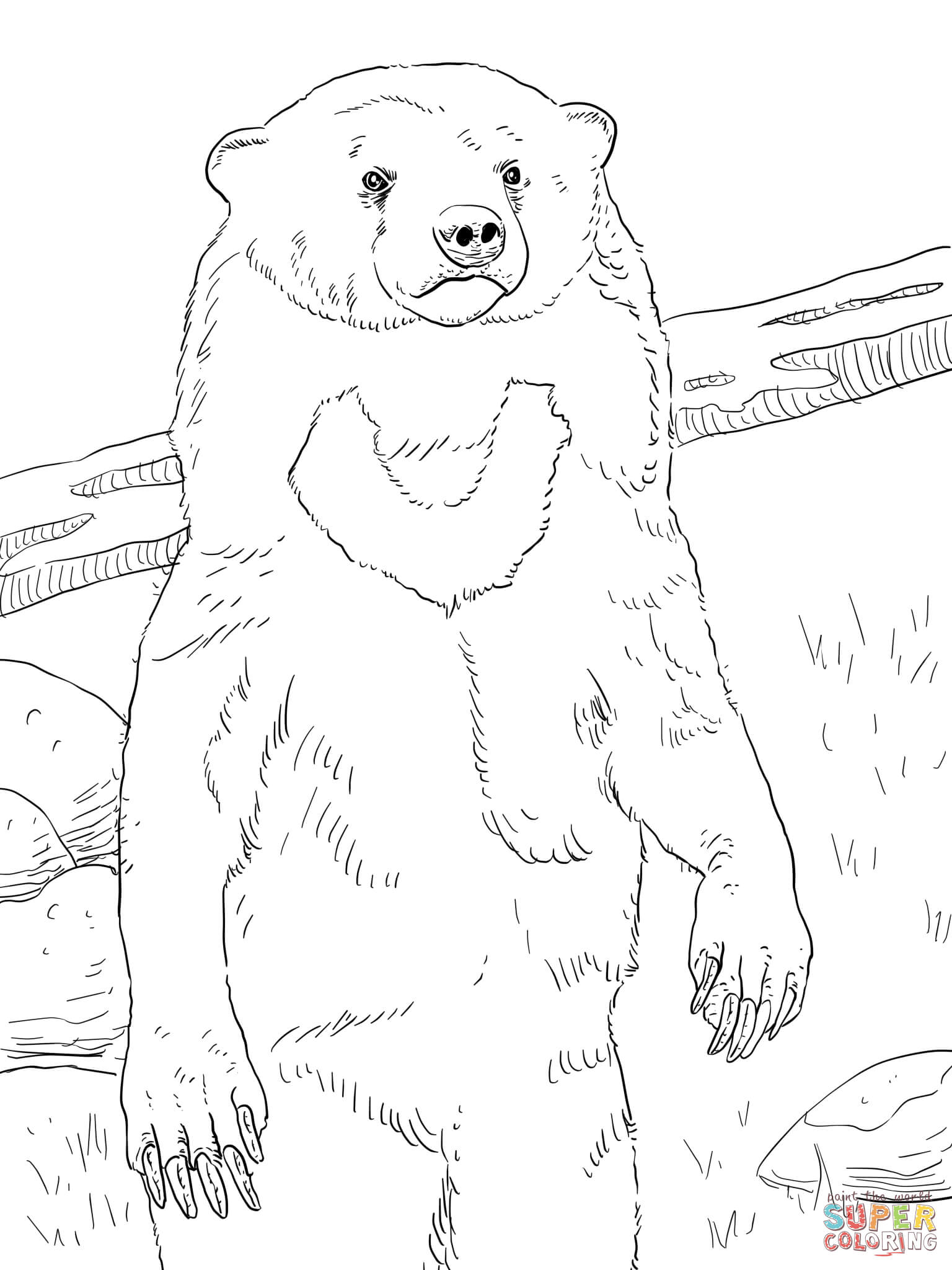 Realistic coloring page free. Bears clipart sun bear