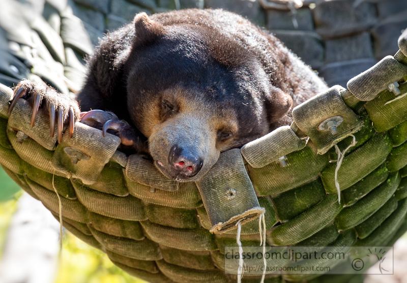 Omnivorous photo e classroom. Bears clipart sun bear