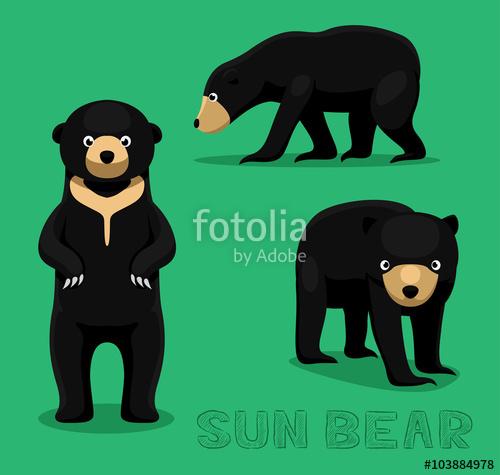 Cartoon vector illustration stock. Bears clipart sun bear