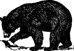 Black bear clip art. Bears clipart vector