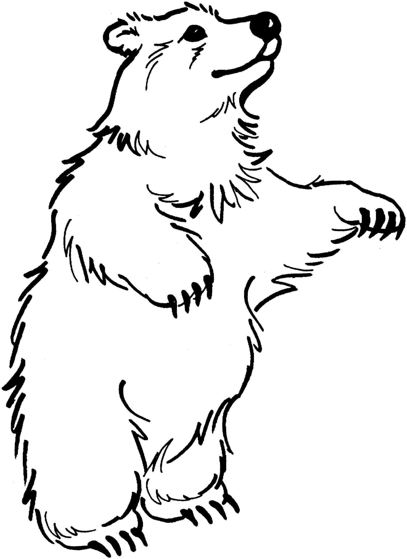Bear black and white. Bears clipart wild